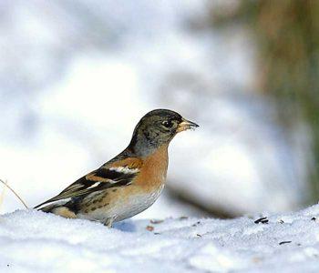 Kuş Ve Bitki Gözlemciliği